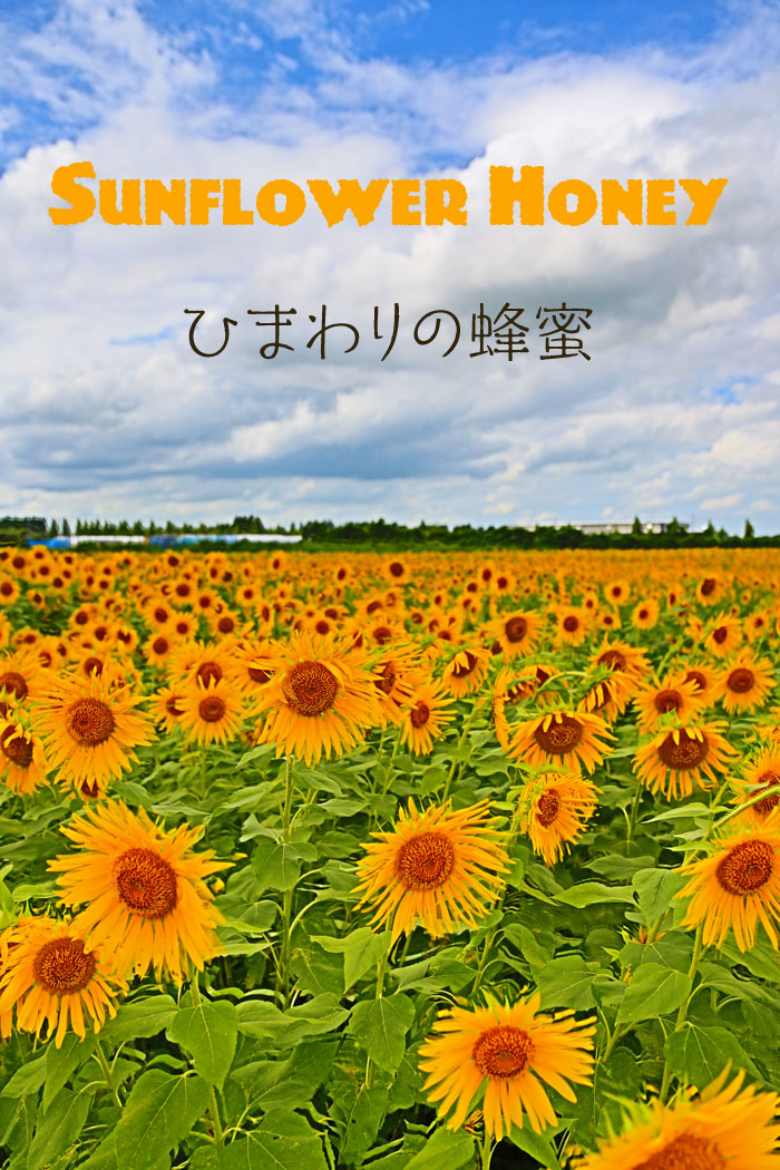 養蜂家 八米ハチベイのひまわり畑