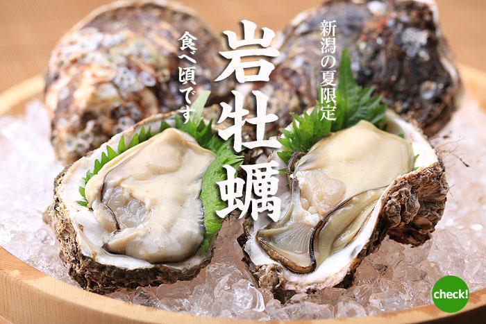 新潟の夏 岩牡蠣