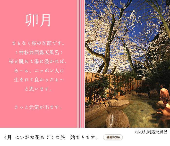 卯月 まもなく桜の季節です