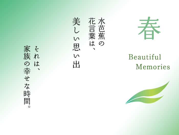 水芭蕉の花言葉は、美しい思い出