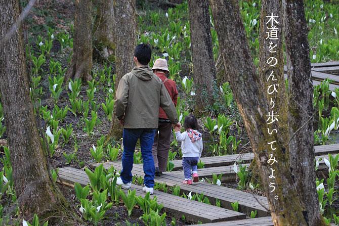 水芭蕉の木道を歩く